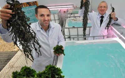 North Tyneside Seaweed Firms Praises Government Support to Small Businesses